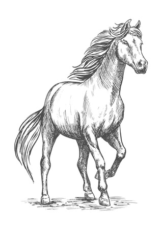 Illustration pour White horse with stomping hoof. Pencil sketch portrait. Prancing mustang with proud glance in free motion - image libre de droit
