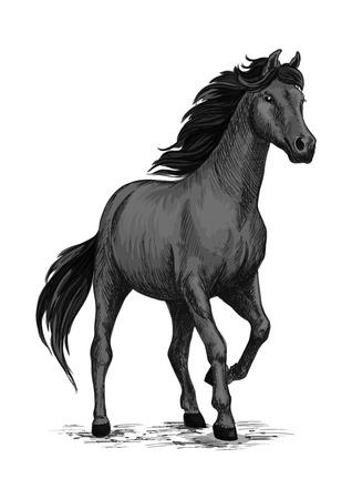 Ilustración de Wild black mustang stallion standing and stomping with hoof. For equestrian sport and hose riding, equine design. Black horse sketch - Imagen libre de derechos