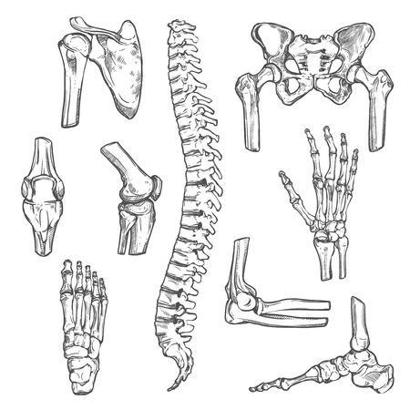 Ilustración de Vector sketch icons of human body bones and joints - Imagen libre de derechos