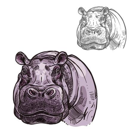 Illustration for Hippopotamus hippo head or muzzle sketch icon. Vector isolated African wild mammal of pygmy hippo animal for zoology, mascot blazon of sport team, wildlife savanna nature - Royalty Free Image