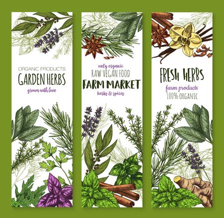 Illustration pour Herb and spice, fresh garden food sketch banner - image libre de droit