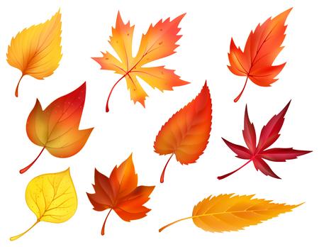 Illustration pour Autumn foliage of fall falling leaves vector icons - image libre de droit