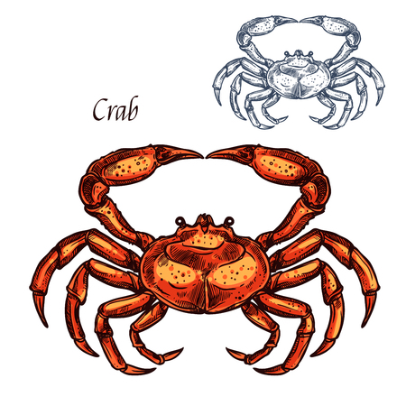 Illustration pour Crab animal isolated sketch. Ocean crustacean, sea crab or lobster sign with red shell and claw. Marine shellfish symbol for seafood restaurant or underwater wildlife design - image libre de droit