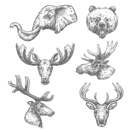 Illustration pour Animal sketch set of african and forest mammal - image libre de droit
