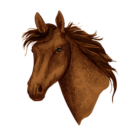 Illustration pour Horse or brown mustang head with wavy mane. Wild equine animal muzzle or racehorse trotter for sport team mascot or stallion for equestrian contest or horse races and exhibition. Vector isolated icon - image libre de droit