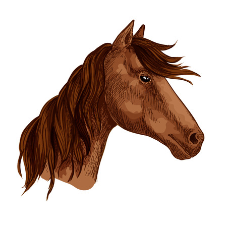 Illustration pour Horse or racehorse animal head with waving mane. Brown mustang muzzle of wild or domestic stallion or mare for equine sport or equestrian races contest or team mascot. Vector isolated sketch icon - image libre de droit