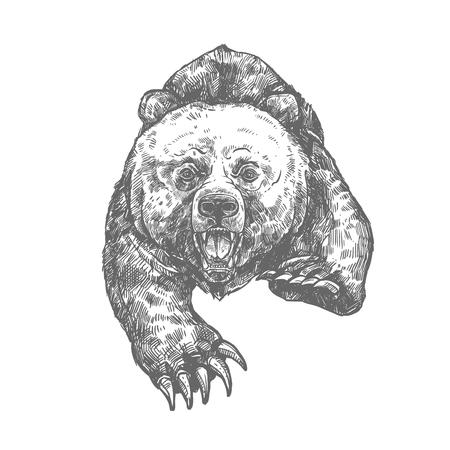 Ilustración de Bear attack isolated sketch of aggressive animal - Imagen libre de derechos
