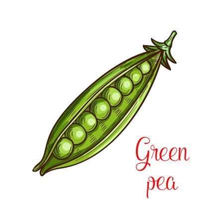 Ilustración de Green pea vegetable sketch of fresh legume - Imagen libre de derechos