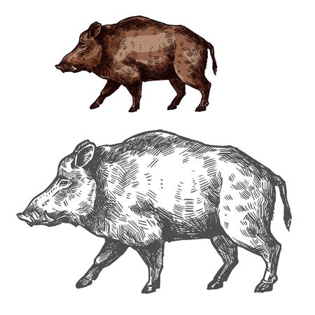 Illustration pour Boar aper muzzle vector sketch wild animal - image libre de droit