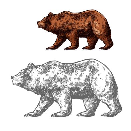 Ilustración de Bear walking sketch of brown grizzly. Wild predatory animal of walking or standing bear for forest wildlife and hunting sport club badge design - Imagen libre de derechos