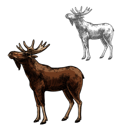 Illustration pour Elk wild animal sketch vector icon side view. Wild mammal elk or moose species for wildlife fauna and zoology or hunting sport team trophy symbol and nature adventure club design - image libre de droit