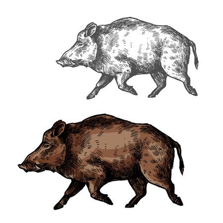Illustration pour Boar aper vector sketch wild animal - image libre de droit