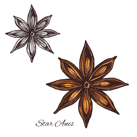 Illustration for Star anise sketch of badian spice cooking ingredient. Anise fruit with seed isolated icon for food seasoning and flavoring plant packaging, cooking book or spice shop label design - Royalty Free Image