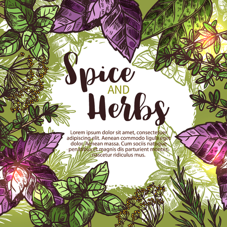 Illustration pour Spice and herb sketch poster with fresh plant, seasoning and condiment. Green and red basil, rosemary and thyme, mint, bay leaf, dill and sage frame border with text layout in center for food design - image libre de droit