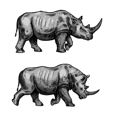Illustration for Rhino walking sketch of african mammal animal. Wild rhinoceros attacking with bended head isolated icon for hunting sport or african safari travel tour themes design - Royalty Free Image