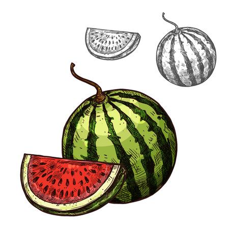 Ilustración de Watermelon vector sketch fruit cut section icon illustration. - Imagen libre de derechos