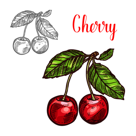 Illustration for Cherry vector sketch fruit berry icon - Royalty Free Image