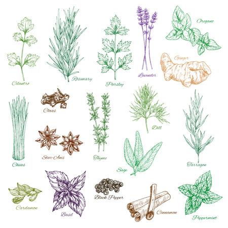 Ilustración de Vector icons set of spices and herbs seasonings - Imagen libre de derechos