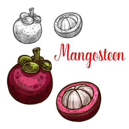 Ilustración de Mangosteen vector sketch fruit cut icon - Imagen libre de derechos