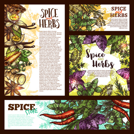 Illustration pour Spice, herb and aromatic vegetable sketch banner Vector illustration. - image libre de droit