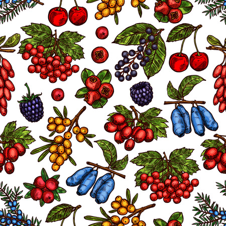 Ilustración de Vector garden and forest berries sketch pattern - Imagen libre de derechos