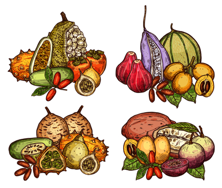 Illustration for Exotic fruit and berry of tropical tree sketch - Royalty Free Image