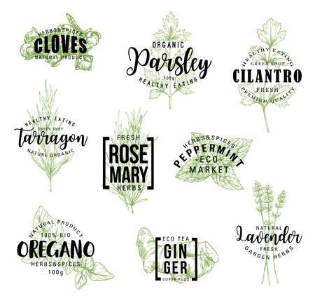 Ilustración de Spices and herbs lettering, natural food ingredient labels. Rosemary, mint and parsley, ginger, oregano and clove, tarragon, cilantro and lavender flower sketch. Vector seasonings illustrations - Imagen libre de derechos