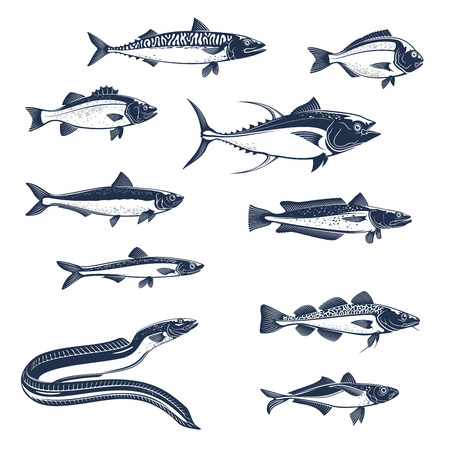 Illustration pour Fish sketch icons. Vector isolated fish scad or horse mackerel, scomber or anchovy and tuna, hake merluccius or sardine and sea bass or dorada gilt-head bream - image libre de droit