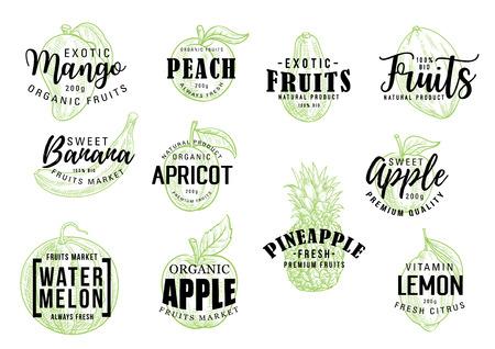 Ilustración de Exotic tropical fruits sketch lettering. Vector calligraphy of mango, peach or banana and apricot, organic apple with pineapple, watermelon and citrus lemon fruit - Imagen libre de derechos