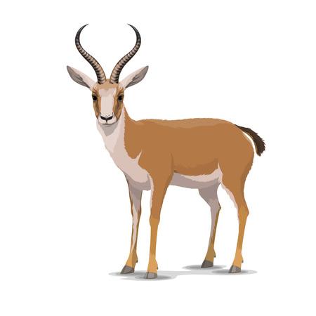 Ilustración de Goitered gazelle animal character. Vector isolated cartoon African wild black-tailed gazelle species with long horns. Zoo, zoology or hunting open season and Safari theme - Imagen libre de derechos