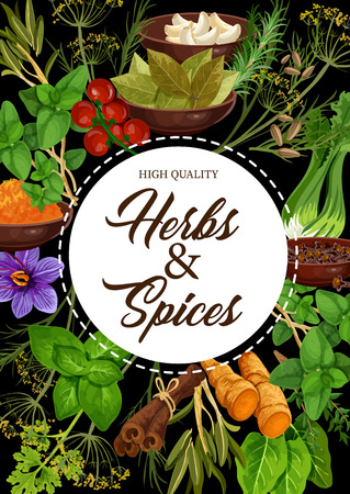 Illustration pour Seasoning herbs and spices or condiments. Vector rosemary and thyme, basil, dill and parsley, sage and bay leaf, onion and oregano, ginger and vanilla or mint, cinnamon, garlic and chili pepper - image libre de droit