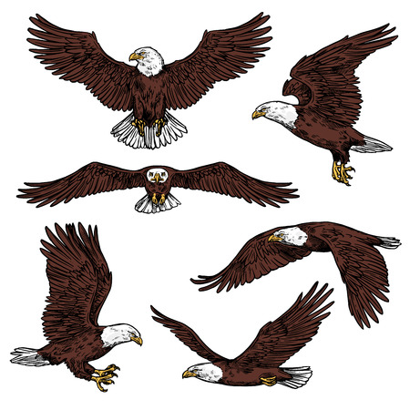 Illustration for Bald eagle icons flying with spread wings front and side view. Vector birds of prey or predatory birds, raptor eagle vulture, falcon or hawk for ornithology or zoo design and power symbol - Royalty Free Image