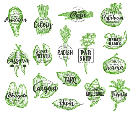 Illustration pour Organic food, vector vegetables silhouettes and lettering. Arracacia and celery, corn and rutabaga, cassava and potato, radish and parsnip, jicama and chayote. Artichoke and turnip veggie - image libre de droit