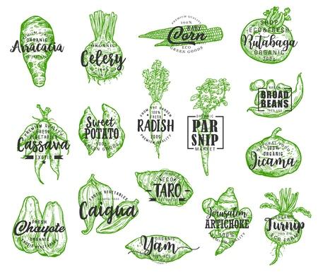 Ilustración de Organic food, vector vegetables silhouettes and lettering. Arracacia and celery, corn and rutabaga, cassava and potato, radish and parsnip, jicama and chayote. Artichoke and turnip veggie - Imagen libre de derechos