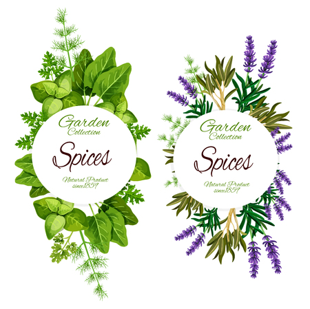 Illustration pour Spices and herbs of lavender, sage or marjoram and sage leaf. Vector natural organic farm food of spinach and sorrel, rosemary and tarragon plant with dill and parsley for salad dressing - image libre de droit