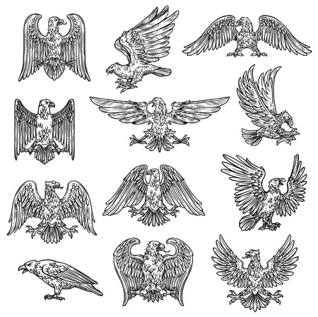 Illustration for Eeagles herladic sketch icons. Vector gothic heraldry bird design, coat of arms and royal shield symbol or tattoo eagle fly with spread wings and claws - Royalty Free Image