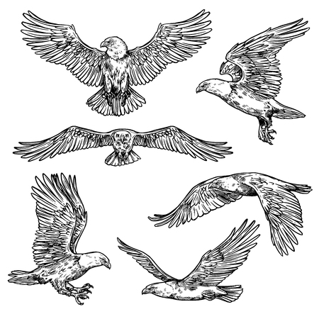 Illustration pour Eagle flight sketches, bird with spread wings and sharp claws with beak. Vector isolated hawk icon, symbol of nobility, power and strength. Wild falcon outline in motion - image libre de droit