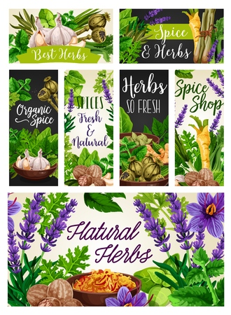 Ilustración de Herbs and spices, natural seasonings, food condiments. Vector garlic and rosemary, poppy and melissa, celery and leek. Lavender and ginger, lemongrass and bay leaf, parsley and saffron, nutmeg - Imagen libre de derechos