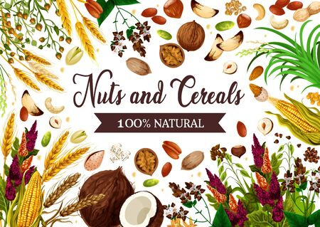 Illustration for Nuts, cereals and grains, healthy organic food. Vector GMO free natural superfood wheat and rye or buckwheat cereals, corn and oatmeal, hazelnut, coconut and almond nuts - Royalty Free Image
