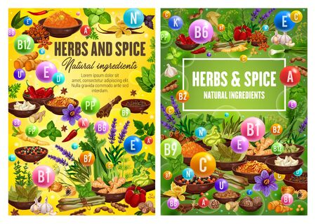 Illustration pour Spices and herbal cooking ingredients, herbs and seasonings, condiments. Vector garlic, mint and basil, rosemary and parsley, dill and lavender, pepper, bay leaf, oregano and cinnamon herbs - image libre de droit