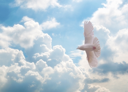 Photo pour white dove flying over sky - image libre de droit