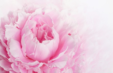 Beautiful pink peony background in vintage style
