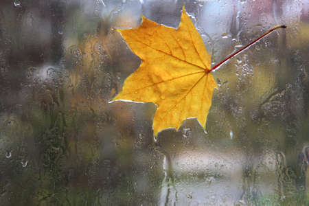 Autumn leaf stuck to the wet glass