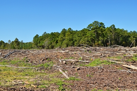 Photo pour land cleared and trees destroyed by machinery - image libre de droit