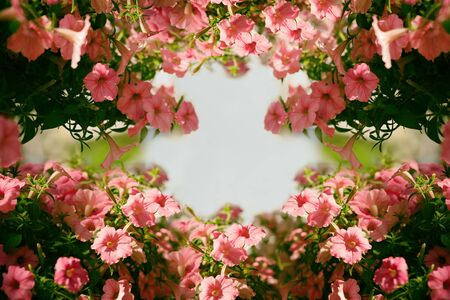Photo pour Close up pink petunia flower in the form of a frame for springtime or summer season. Banner design style with copy space.Flower arrangement with a beautiful bokeh on the background for decoration - image libre de droit