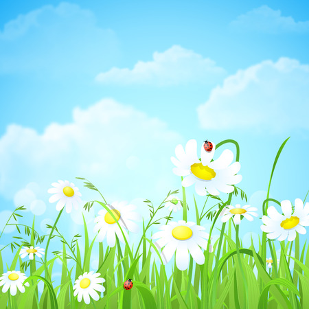 Illustration pour Nice shiny fresh daisy chamomile flower grass lawn with bokeh blur effect sunshine beam background. Nature spring summer backgrounds collection. - image libre de droit