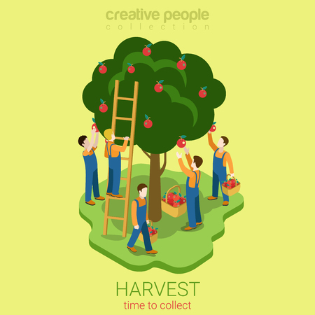 Ilustración de Apple harvest collect season concept flat 3d web isometric infographic concept vector. Men pluck pire apples from the tree to the basket. Creative people collection. - Imagen libre de derechos