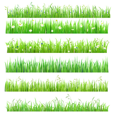 Illustration pour Set of 6 seamless nice shiny fresh flower daisy chamomile grass lines isolated background. Nature spring summer backgrounds collection. - image libre de droit