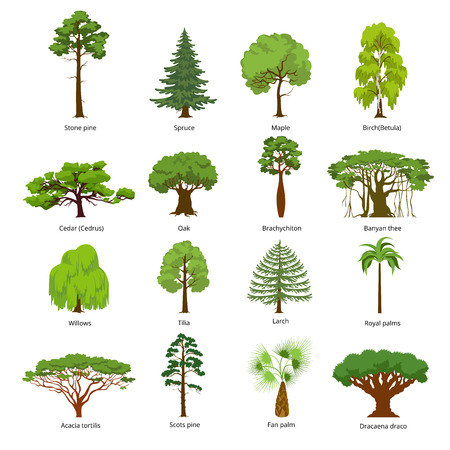 Illustrazione per Flat green trees vector illustration set. Stone pine, spruce, maple, birch, cedar, oak, brachychiton, banyan, willow, larch, palm, scots pine forest tree icons. Nature concept. - Immagini Royalty Free