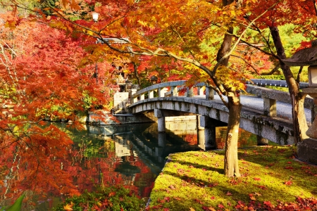 Photo pour Fall foliage at Eikando Temple in Kyoto, Japan. - image libre de droit